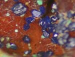Azurite, MalachiteMicrominerals -Secondary Minerals, Various Localities, Page Two